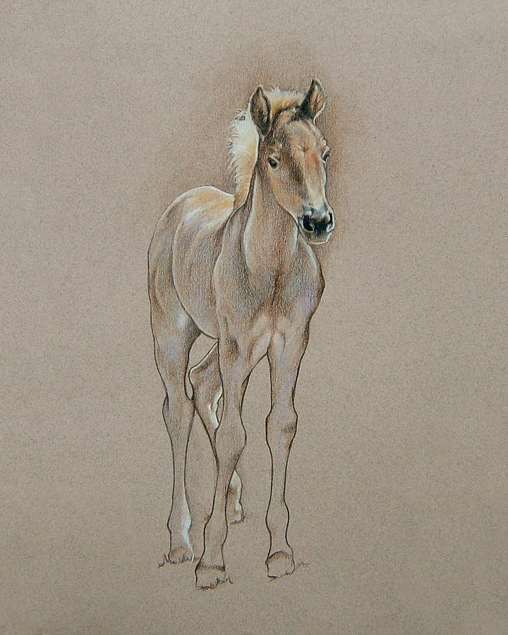 Horse Drawing - Cyndees Foal by Cindy Davis