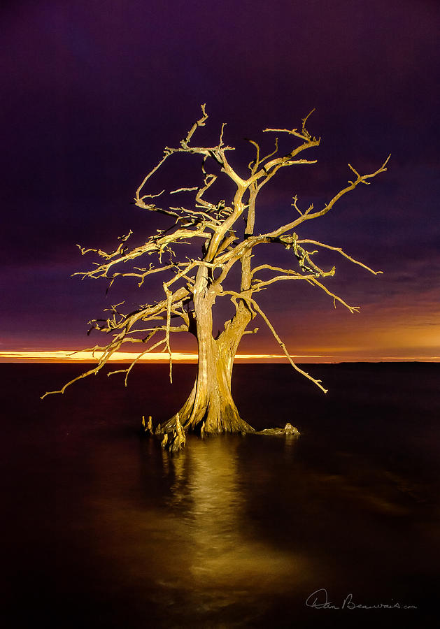 Cypress At Sunset 2860 Photograph