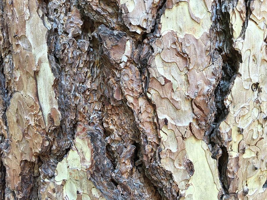 Cypress Bark by Cheryl Goodberg