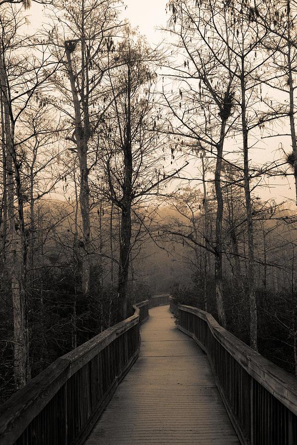 Cypress Photograph - Cypress Boardwalk by Gary Dean Mercer Clark