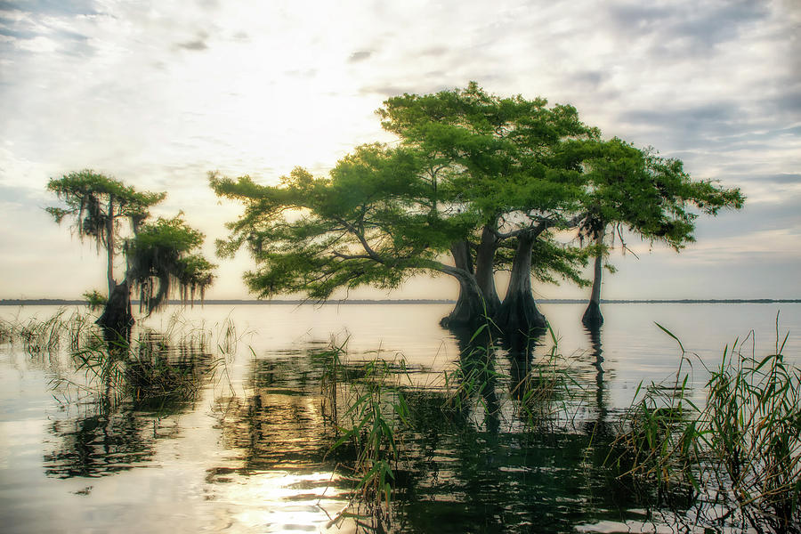 Cypress Bonsai by Ghostwinds Photography