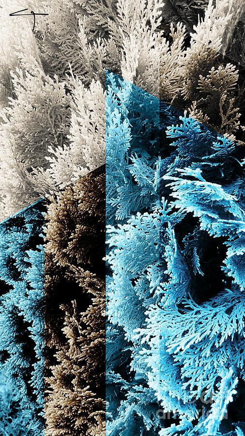 Abstract Photograph - Cypress Branches No.3 by Cesar Padilla