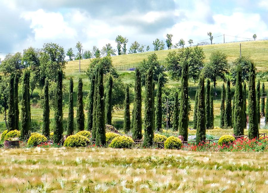 Umbria Photograph - Cypress Heaven by Dorothy Berry-Lound