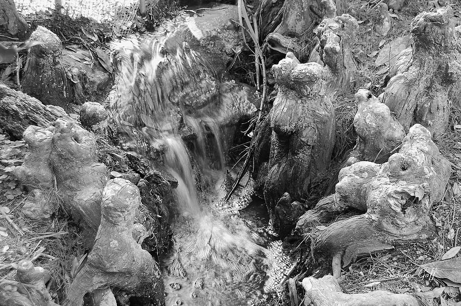 Black And White Photograph - Cypress Knees II by Suzanne Gaff