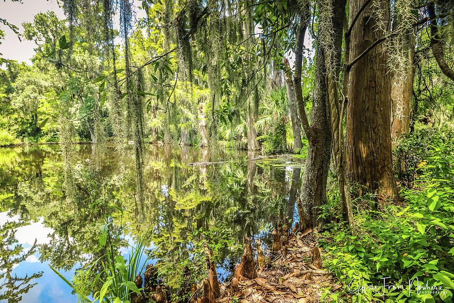 Cypress Photograph - Cypress Pond Delight by Dana Foreman