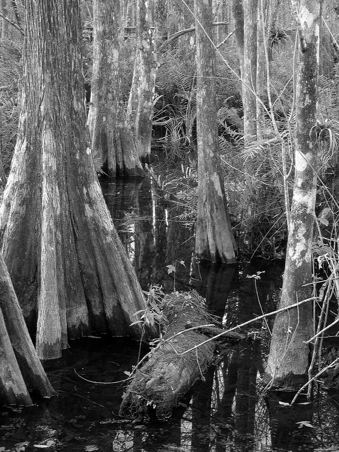 Black Photograph - Cypress Pond by Juergen Roth