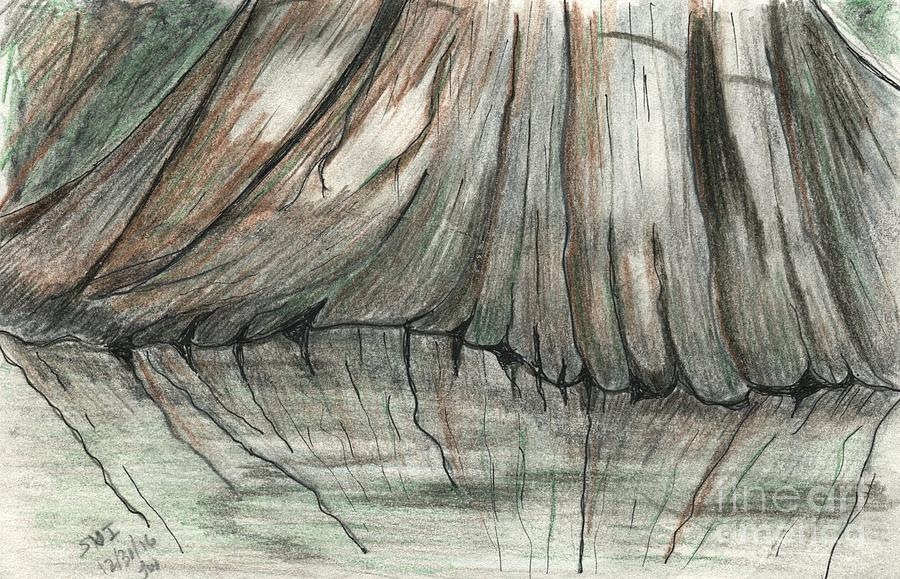 Cypress Drawing - Cypress Reflections by Theresa Willingham