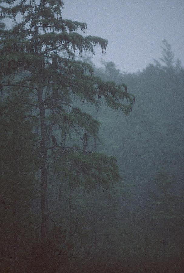 Cypress Photograph - Cypress Swamp by Kimberly Mohlenhoff