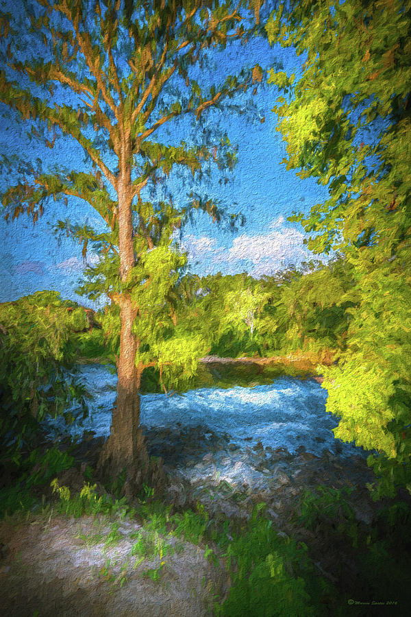 Cypress Photograph - Cypress Tree By The River by Marvin Spates
