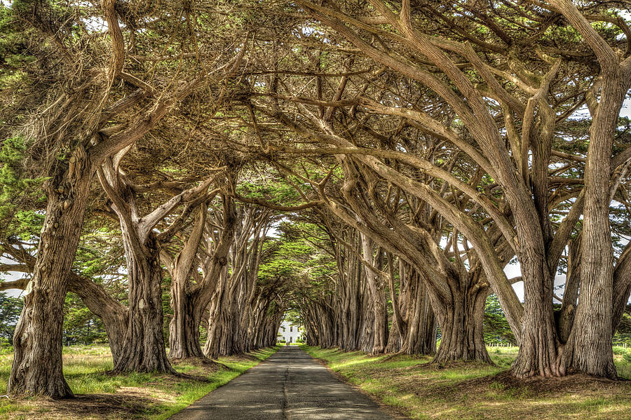 Cypress Tree Tunnel, Point Reyes Photograph by Soroush ...