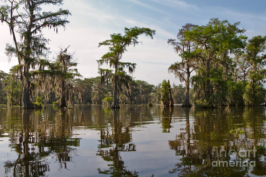 Swamp Photograph - Cypress Trees And Spanish Moss In Lake Martin by Louise Heusinkveld