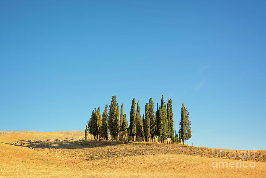 Tuscany Photograph - Cypress Trees by Delphimages Photo Creations
