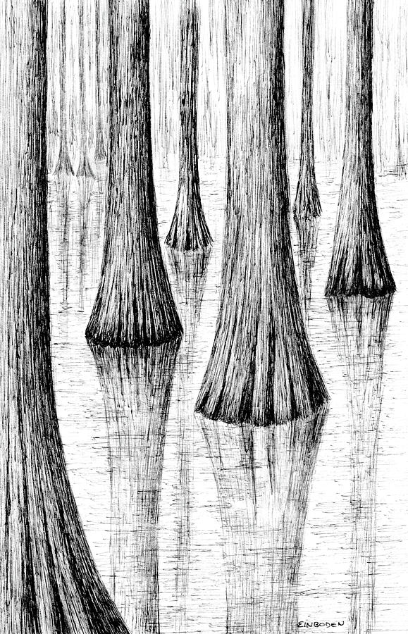 Cypress Trees Drawing by Ed Einboden