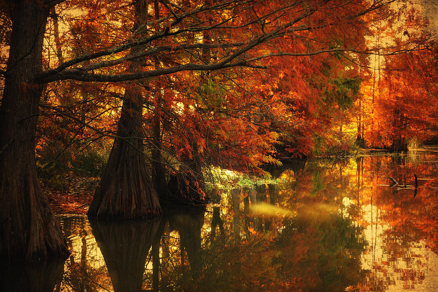 Cypress Trees Photograph - Cypress Trees In The Misy Morning by Iris Greenwell