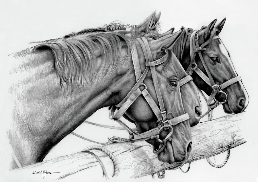 Horse Drawing - Da158 3 Horses Daniel Adams  by Daniel Adams