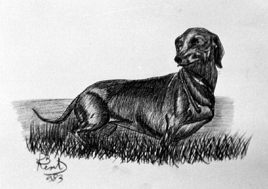 Flowers Drawing - Dachshund 1  by Paul Bonnie Kent