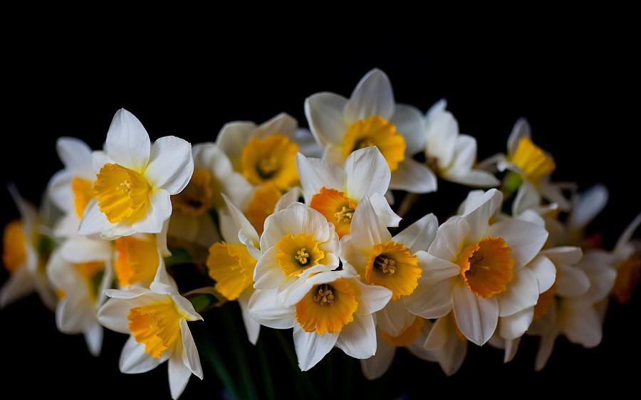 Daffodil Digital Art - Daffodil by Dorothy Binder