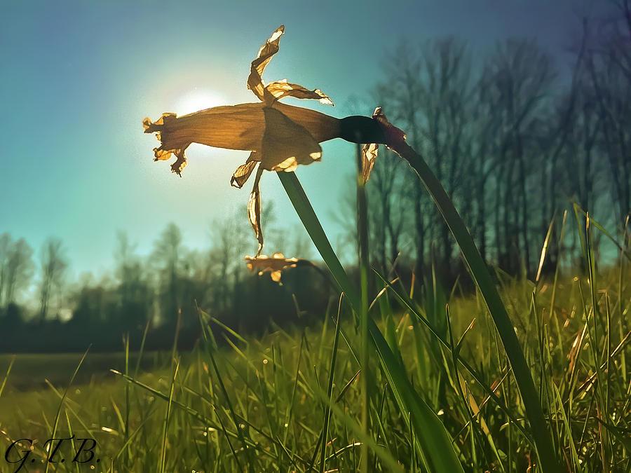 Flower Photograph - Daffodil by Garrett Blum