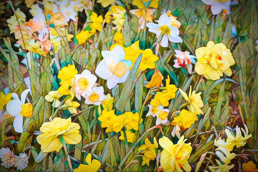 Daffodils 13 by Pamela Cooper
