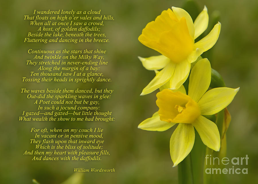 daffodils by william wordsworth The speaker (william wordsworth) himself is walking aimlessly down the hills and valley, when he stumbled upon a beautiful field of daffodils.