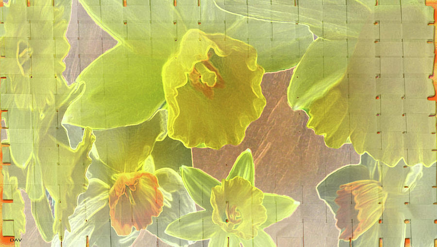 Designed Daffy Daffodils Digital Art - Daffy Daffodils by Debra     Vatalaro