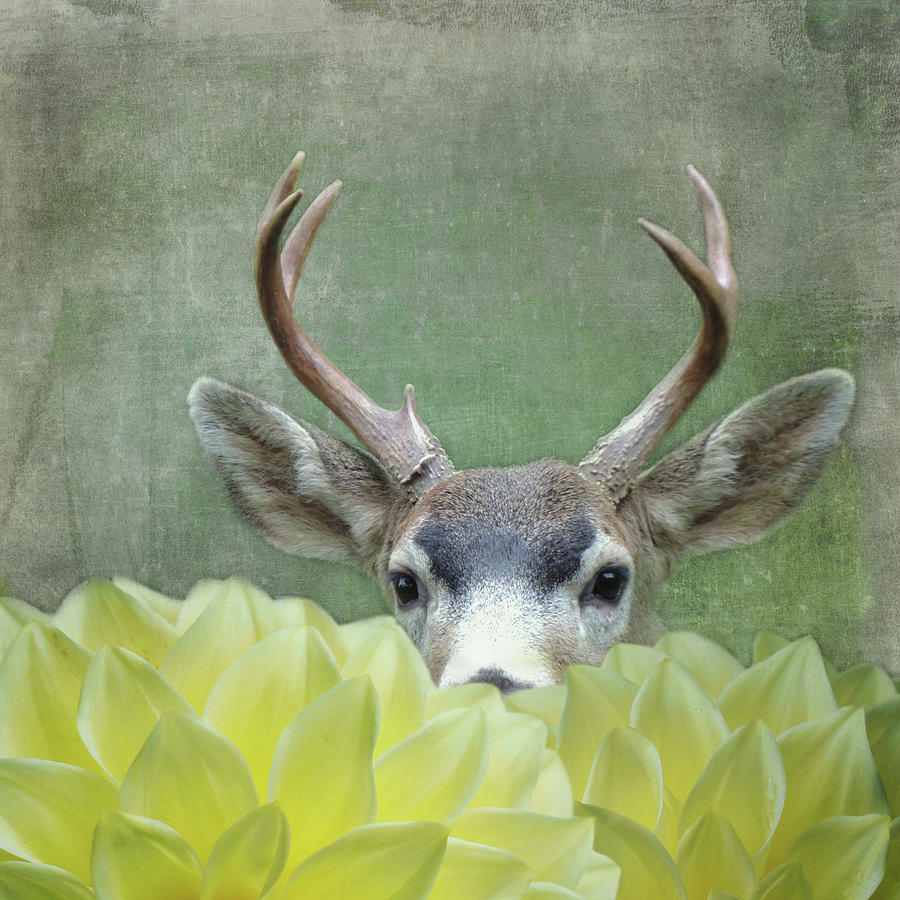 Dahlia Deer by Sally Banfill