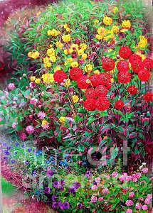 Flower Painting - Dahlia Garden  by Bo Li