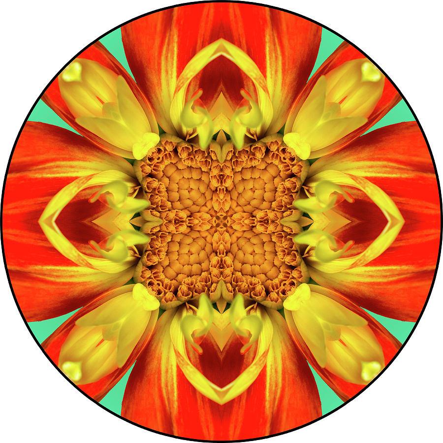 Dahlia Pooh Digital Mandala 08 Digital Art by Digital Mandala