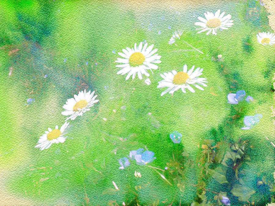 Daisies And Forget Me Not Photograph