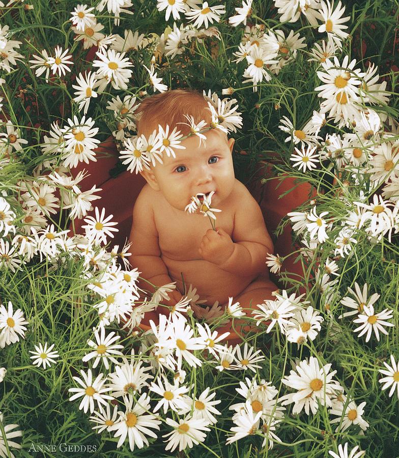 Daisies Photograph - Daisies by Anne Geddes