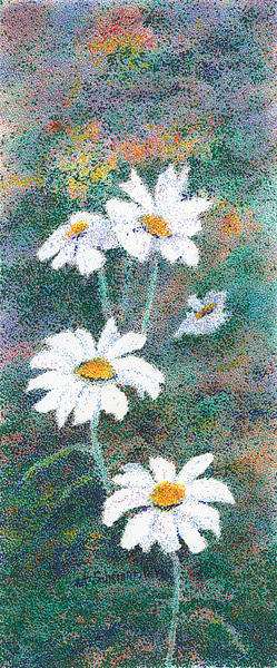 Flowers Drawing - Daisies by Pat Schermerhorn