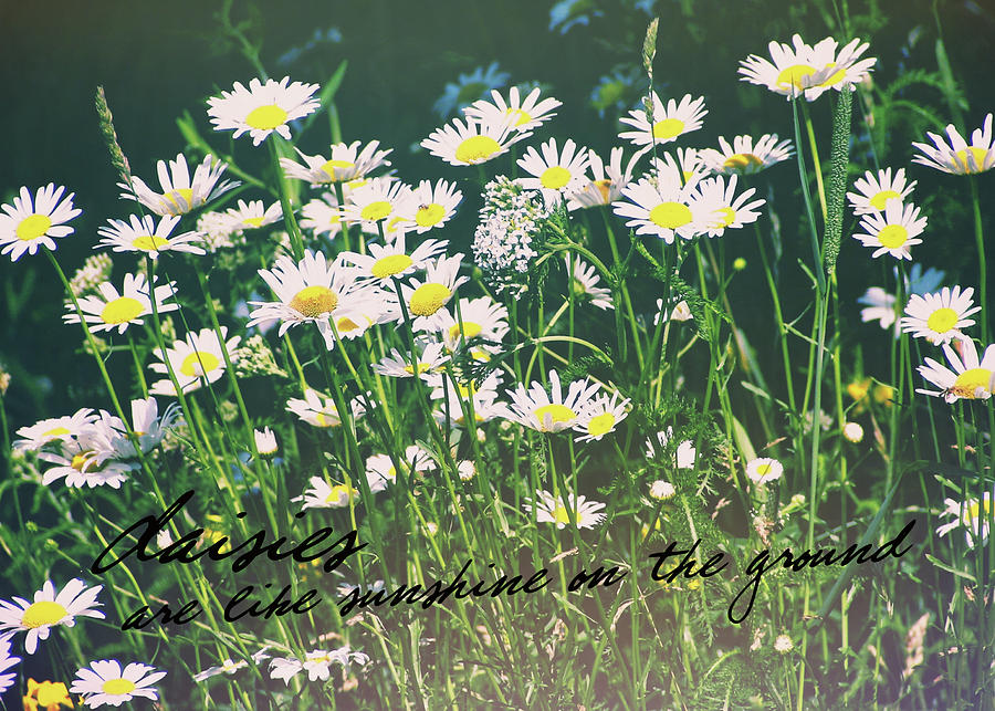 Daisy Photograph - Daisies Quote by JAMART Photography