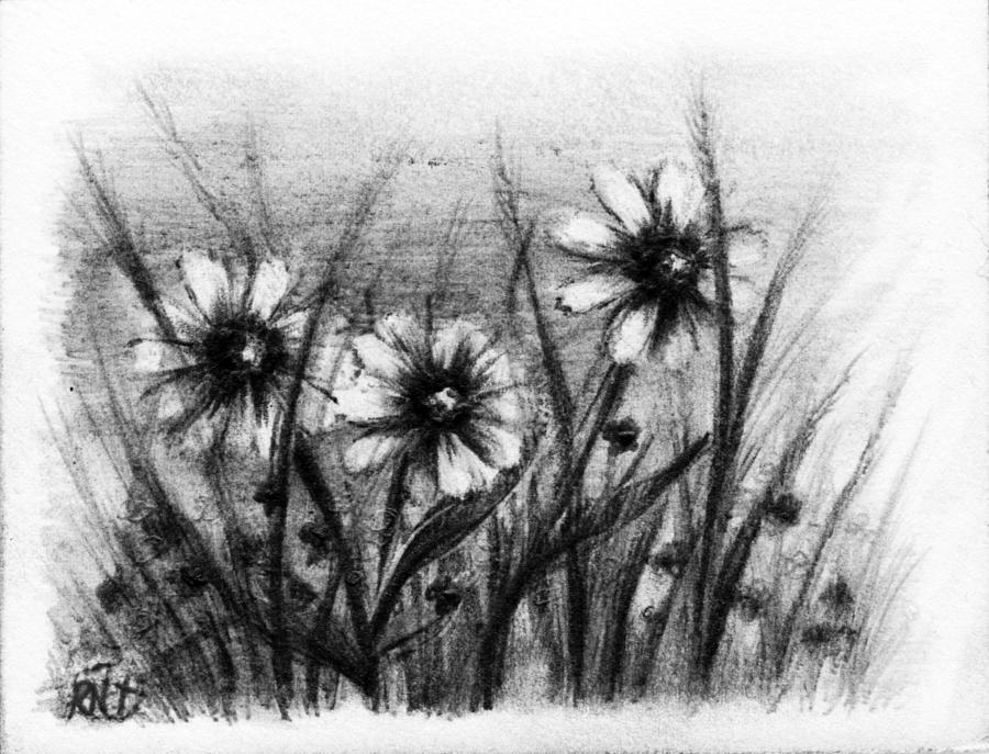 Flowers Drawing - Daisies by Rachel Christine Nowicki