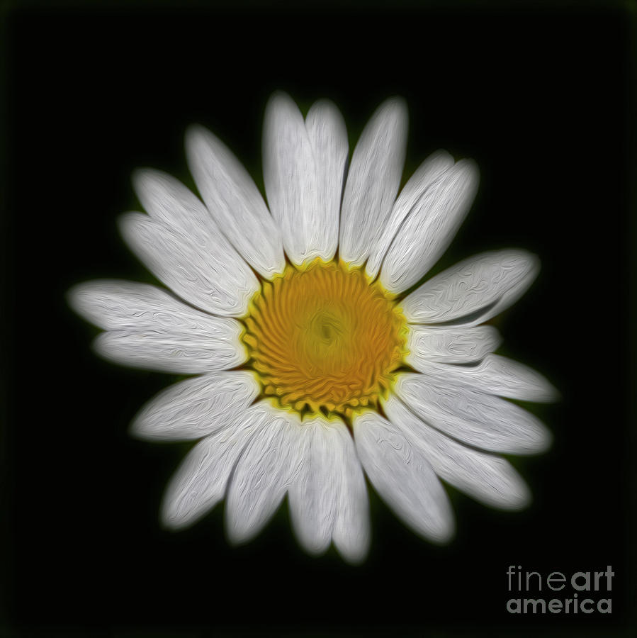 Daisy Flower Photograph - Daisy 1 by Candydash Images