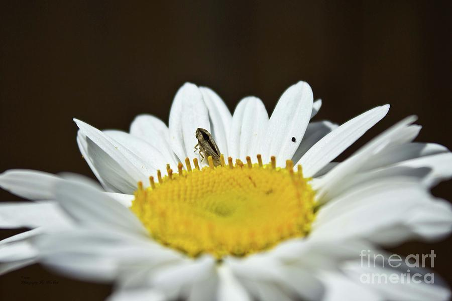 Daisy and Leafhopper by Ms Judi