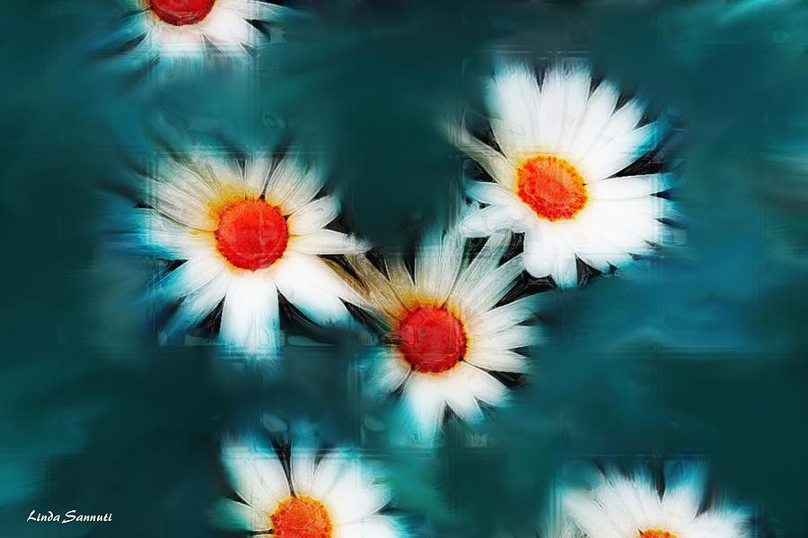 Flowers Photograph - Daisy Blue by Linda Sannuti