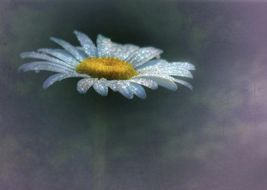 Flower Mixed Media - Daisy Daydreams by Lori Deiter