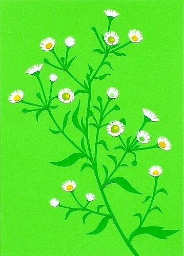 Flower Mixed Media - Daisy Fleabane by Tomoko  Hirano