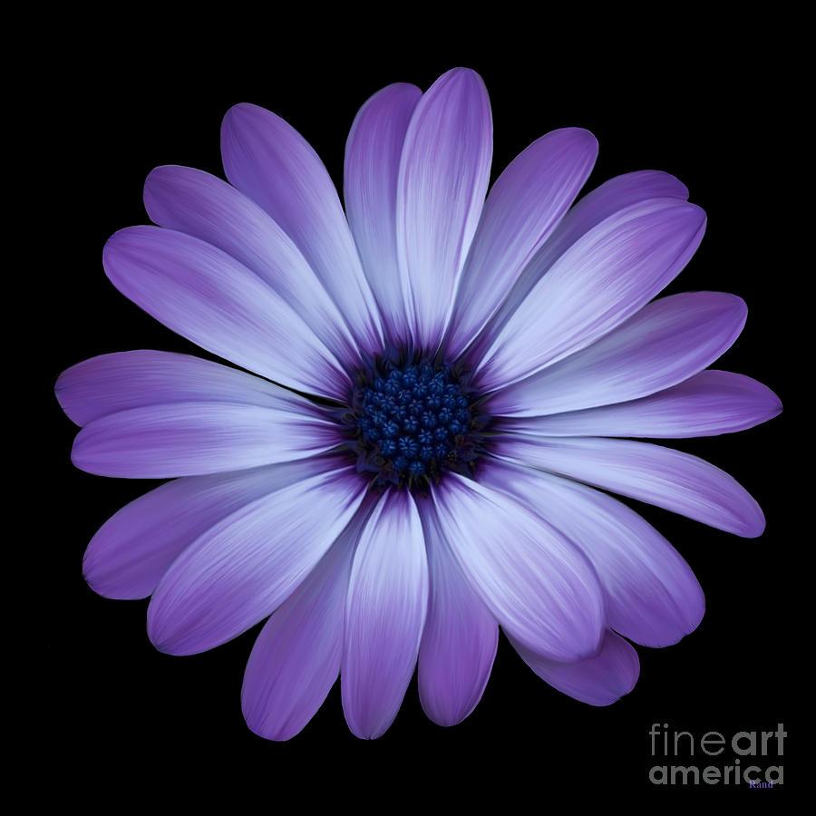 Daisy for G by Rand Herron