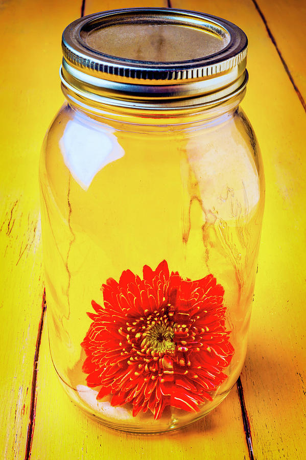 Mood Photograph - Daisy In Glass Jar by Garry Gay