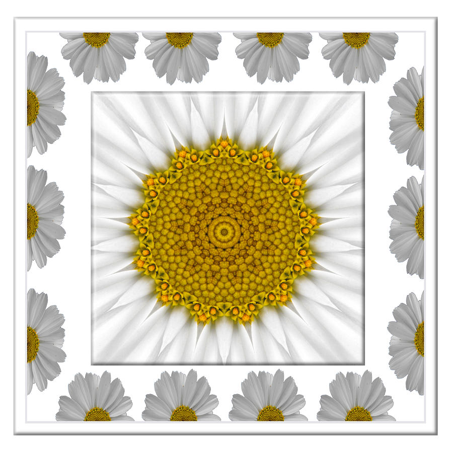 Daisy Photograph - Daisy Kaleidoscope In Daisy Border by Jan  Tribe