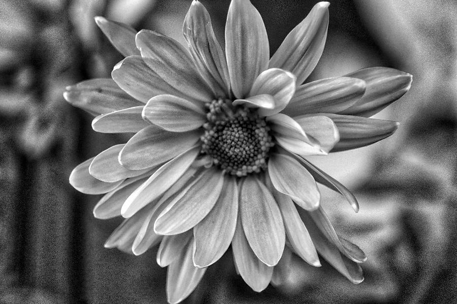 Daisy Power 2 by Linda James