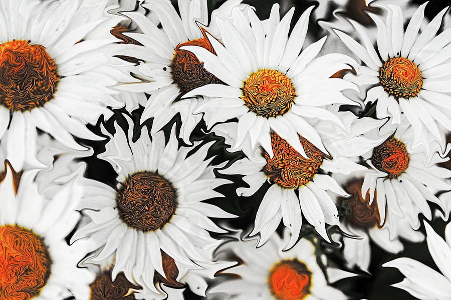 Daisy Daisy Digital Art - Daisy With A Twist by MaryAnn Janzen