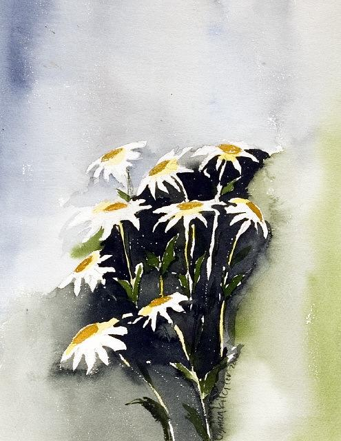 Flowers Painting - Daisys by Osman Kilciler