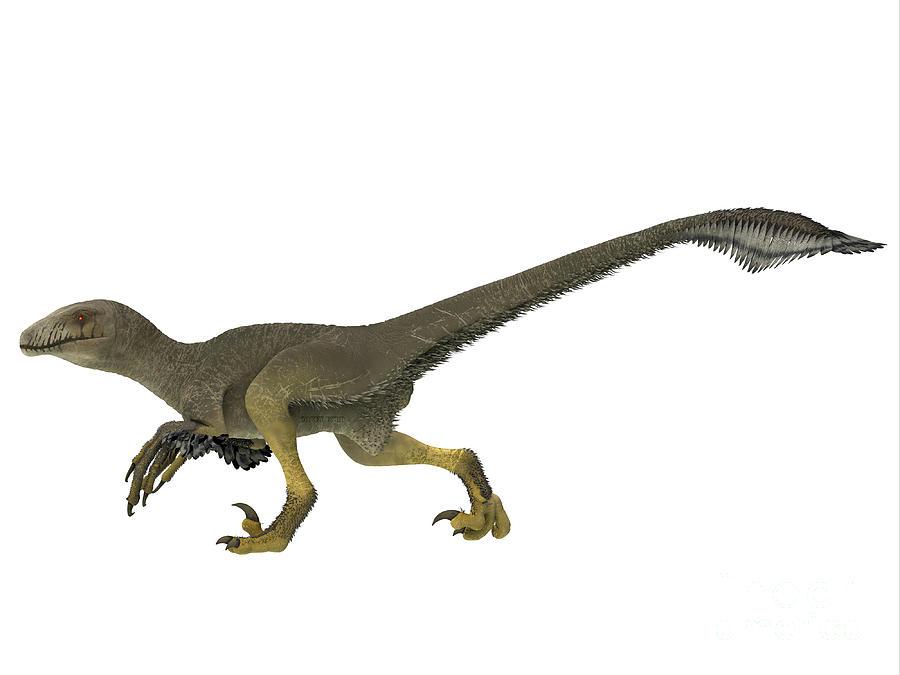 Dinosaur Digital Art - Dakotaraptor Dinosaur Side Profile by Corey Ford