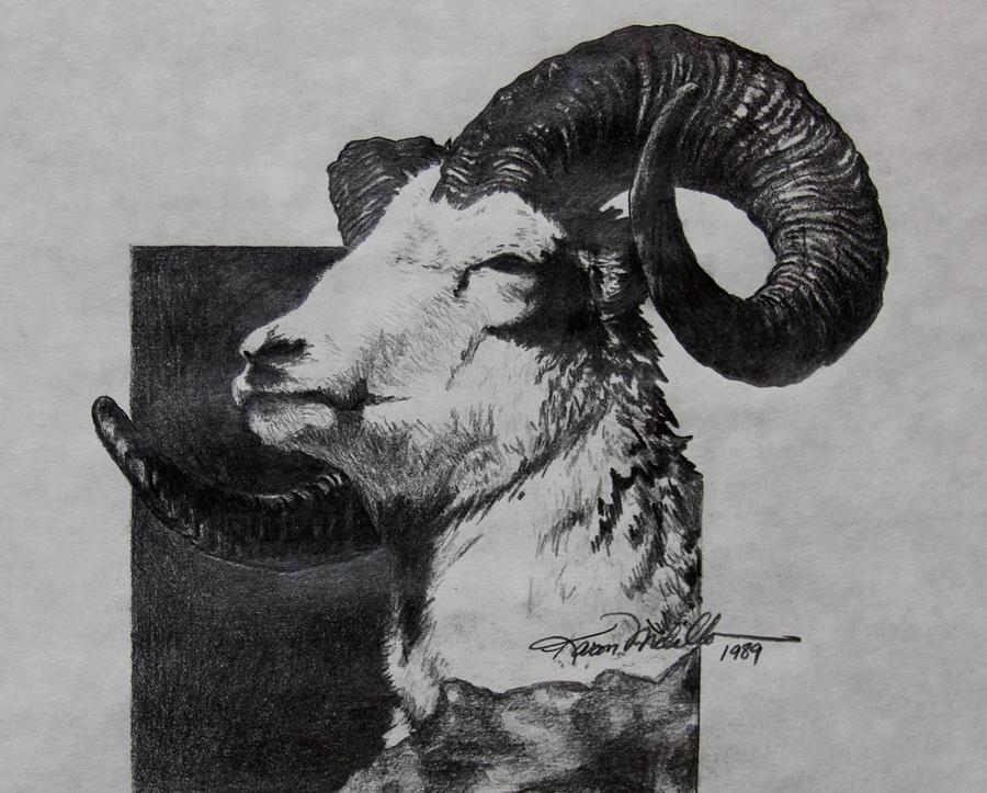 Dall Drawing - Dall Ram by Karon Melillo DeVega