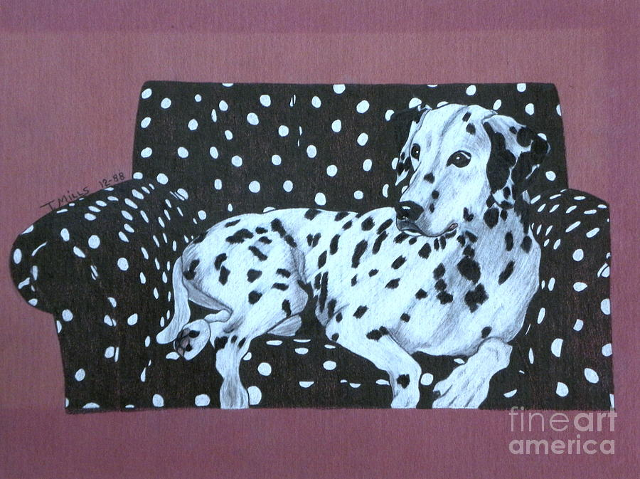 Dog Drawing - Dalmatian On A Spotted Couch by Terri Mills