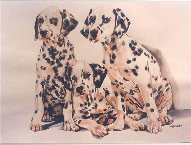 Dogs Painting - dalmation Pups by Sabrina Siga