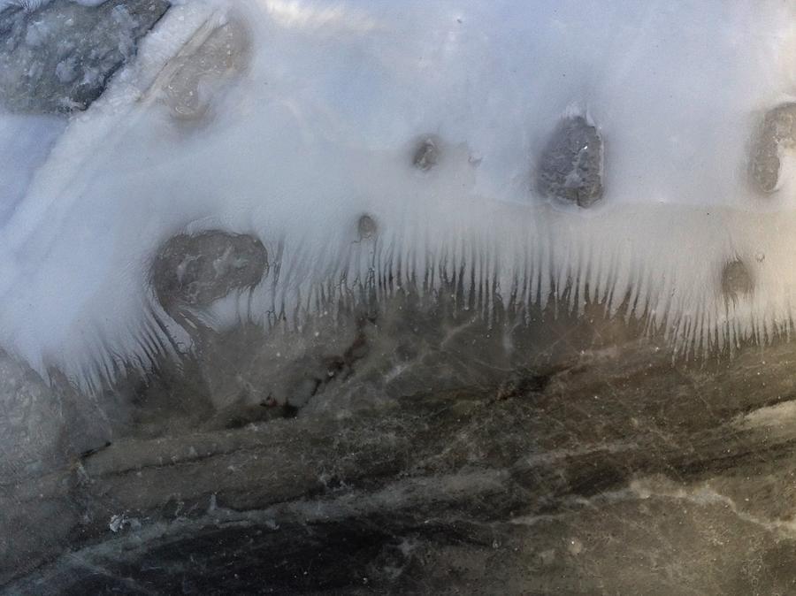 Abstract Painting - Dalton deep sea fish toof by Gyula Julian Lovas