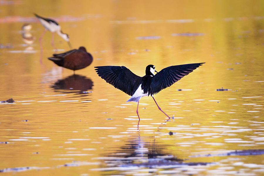 Bird Photograph - Dance Like Nobodys Watching by Emily Bristor